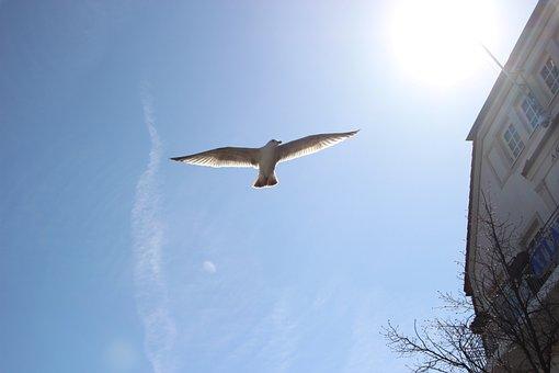 Seagull, Sky, Bird, Sea, Flying, Wing, Animal, Freedom