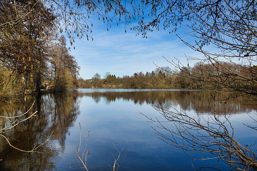 Pond, Water, Reflection, Nature, Spring, Autumn, Tree