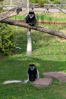 Zoo, Zoo Animels, Color, Wildlife, Portraits