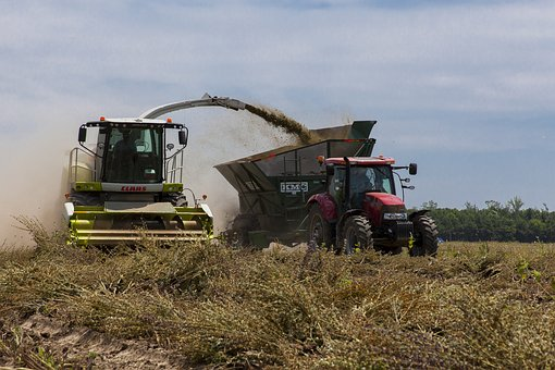 Clary Sage, Agriculture, Crop, Farm, Landscape, Rural