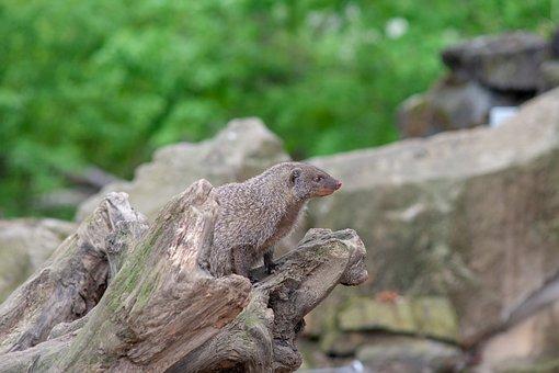 Wild Animals, Animal, Zoo, Dresden, Wild