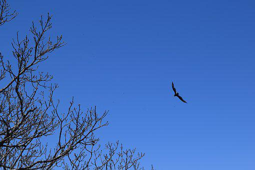 Hawk, Mountains, Raptor, Sky, Blue