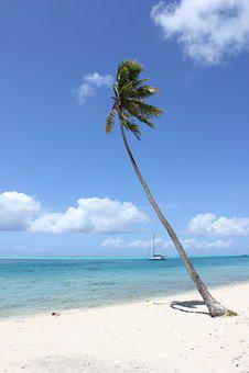 Bora Bora, Palm Tree, Beach, Tahiti, Travel, Tropical