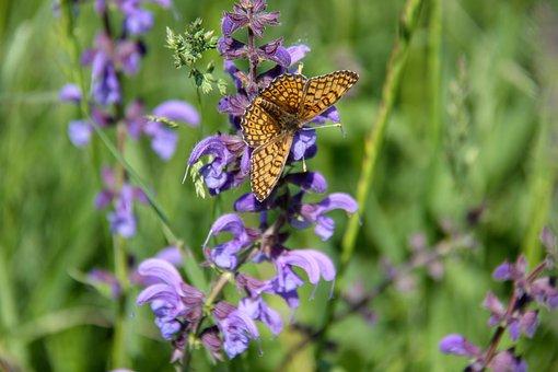 Butterfly, Pre, Nature, Flower, Spring, Brown, Orange