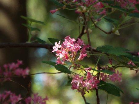 Spring, Flower, Nature, Blossom, Garden, Springtime