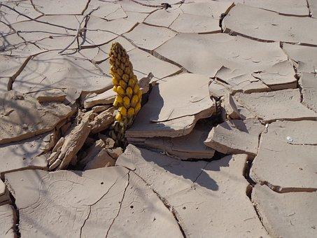Desert, Flower, Egypt, Nature, Cactus, Prickly, Summer