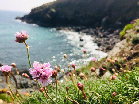 Flower, Sea, Nature, Colorful, Plant, Water, Flora
