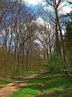 Spring, April, May, Landscape, Forest, Grass, Greens