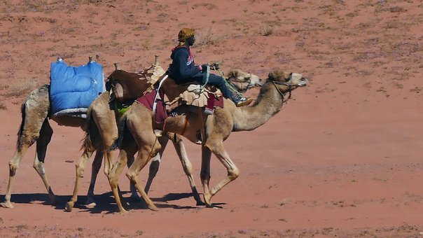 Wadirum, Agaba, Desert, Jordan, Bedouin, Goat, Ram