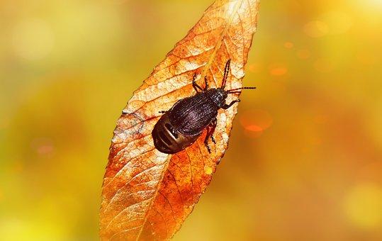 Rozdestnica Wrotyczówka, Insect, Stonkowate, Leaf