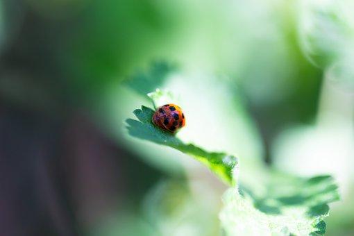 Ladybug, Painted, Children Drawing, Kindergarten