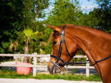 Mare, Horse, Nature, Horseback Riding, Animals, Equine