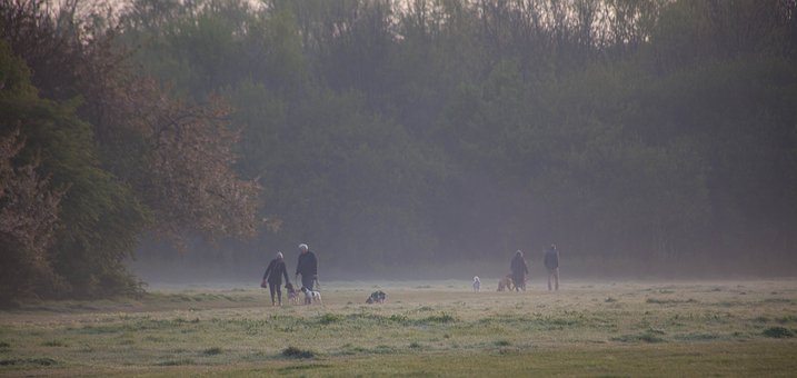 Morning Dog Walk, Morning, Misty Morning, Dog Walkers