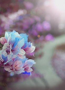 Fueng, Fha, Flower, Floral, Plant, Pastel