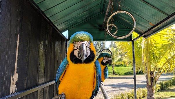 Zoo, Vietnam, Quynhon, Bird