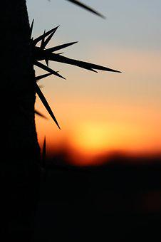 Sunset, In The Evening, Red, Spike, Gledicsia