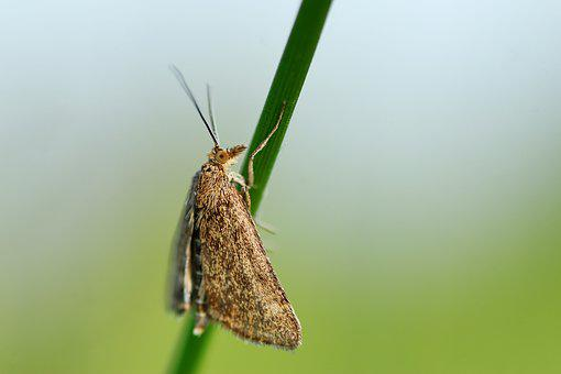 Motte, Butterfly, Insect, Wing, Nature, Macro, Spring