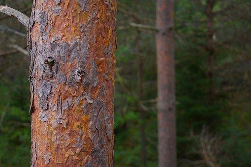 Adirondacks, Forest, Nature, Outdoor, Woods, Travel