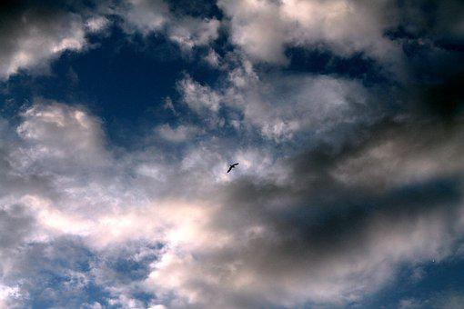 Sky, Clouds, A Bird In The Sky, Nature, Sun, Atmosphere