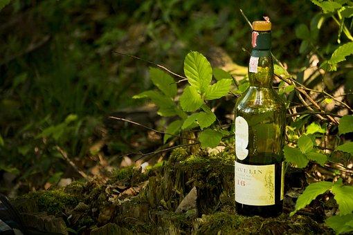 Lagavulin, Whiskey, Nature, Tree, Leaf, Bottle