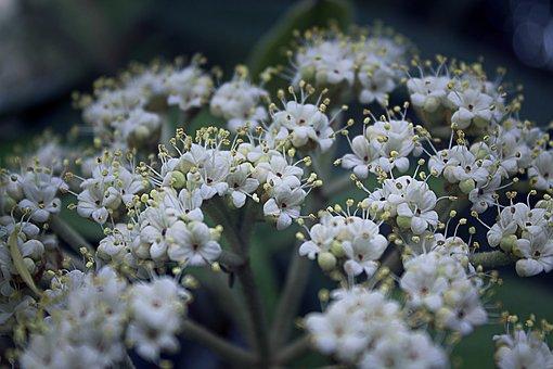 Bush, Blossom, Bloom, Spring, Garden, Nature, White
