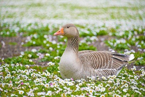 Nature, Animal, Green, Garden, Duck, Fauna, Chill, Park