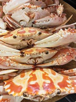 Crab, Flower Crab, Swimmer, Nature, Sea Creature