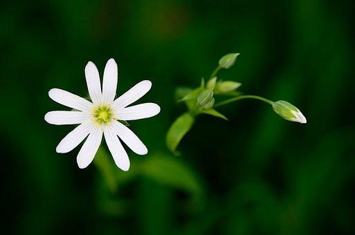 Plant, Flower, Nature, Botany, Flora, Summer, Macro