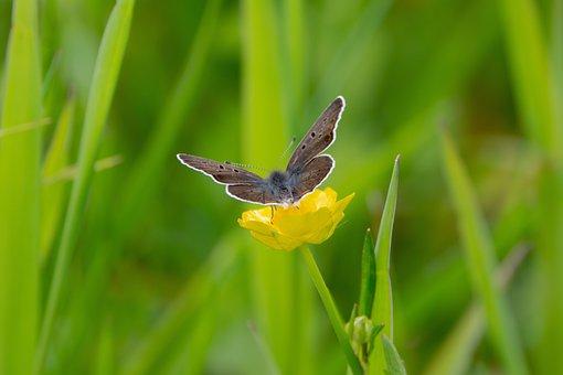Blue Also Dark Brown, Meadow, Spring, Nature, Flower