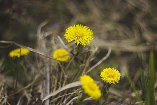 Flowers, Yellow, Grass, Spring, Bloom, Nature