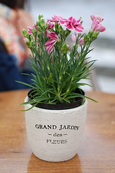 Flower Pot, Flowers, France, French, Clay, Violet