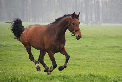 Horses, Whey, Gallop, Animals, Meadow, Pasture, Grass