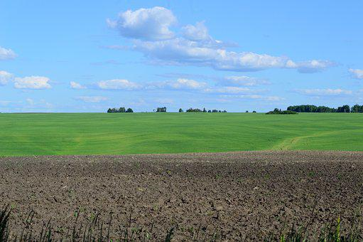 Field, Green Field, Arable Land, Grass, Summer