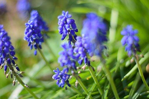 Spring, Flower, Nature, Plant, Blossom, Bloom, Summer