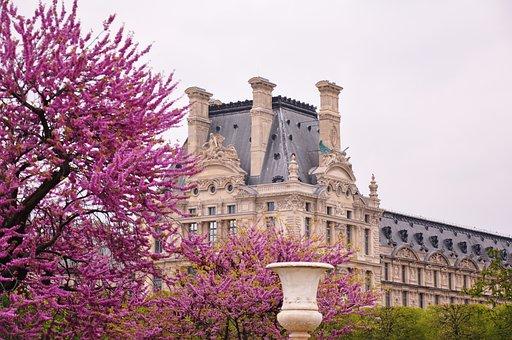 Paris, France, The Louvre, Spring, Bloom, Garden, Tree