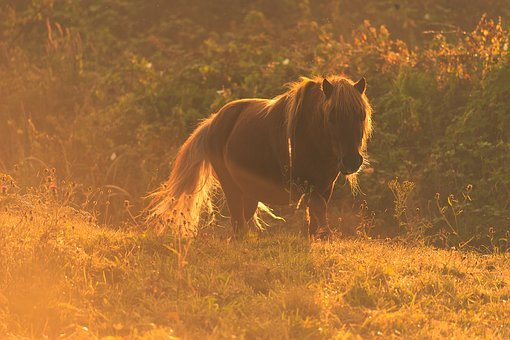 The Horse, Meadow, Sunrise, Pony, Pasture Land, Summer