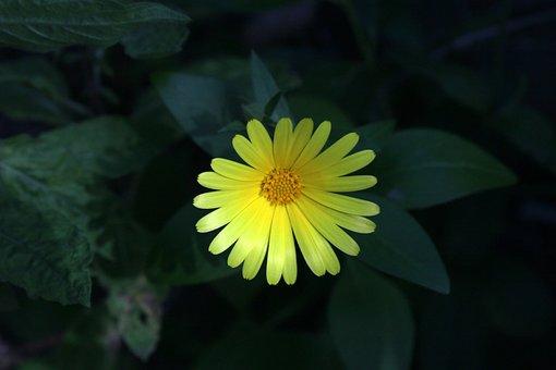 Flower, Primrose, Plant, Evening, Yellowish, Background