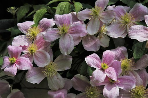 Delicate Flowers, Romantic, Pink, Bloom, Leaving