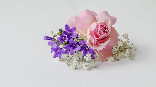 Rose-flower, Rosé, Bellflower, Gypsophila