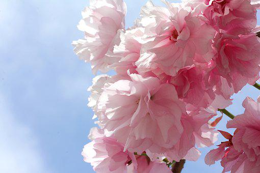 Flowers, Spring, Plant, Flower, Nature, Summer, Rosa
