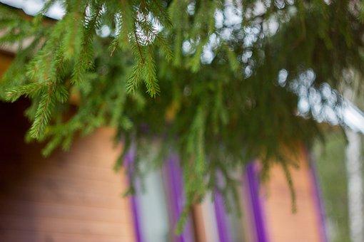 Dacha, Tree, House, Needles, Branch, Window, Spruce