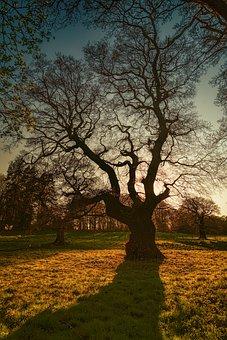 Tree, Kahl, Winter, Evening, Sun, Autumn, Sunset