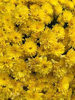 Flowers, Sunflowers, Bloom, Yellow, Summer, Blossom