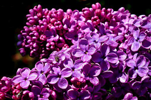 Without, Flowers, Blooming, May, Closeup, Decorative