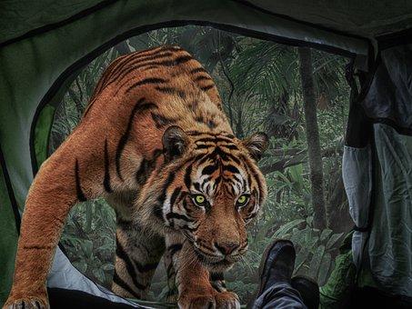 Photomontage, Composing, Tigers, Tent, Risk, Adventure