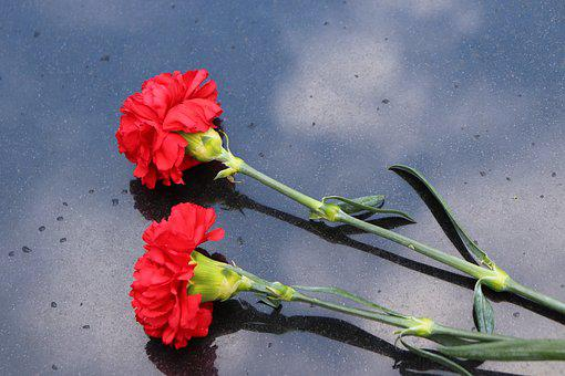 Two Red Carnations, Black Marble