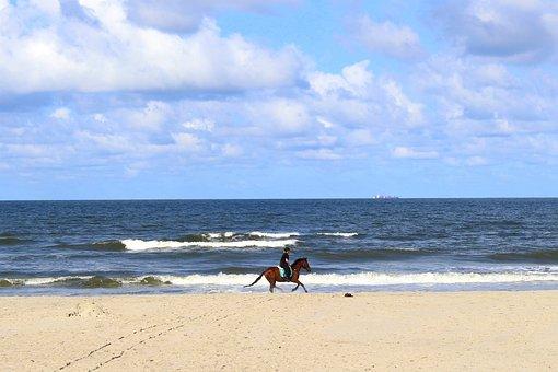 Horse, Langeoog, Nature, Blue, Scenic, Summer, Clouds