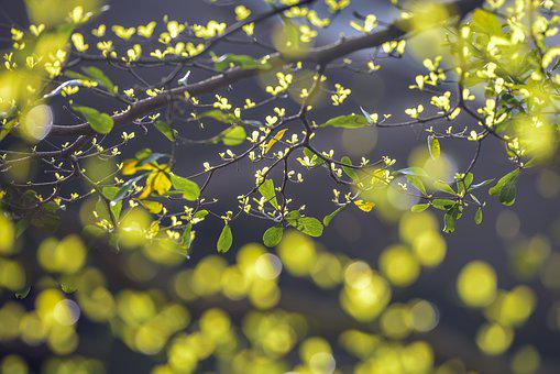 Leaves Sprout In Spring, Background, Beautiful, Bright