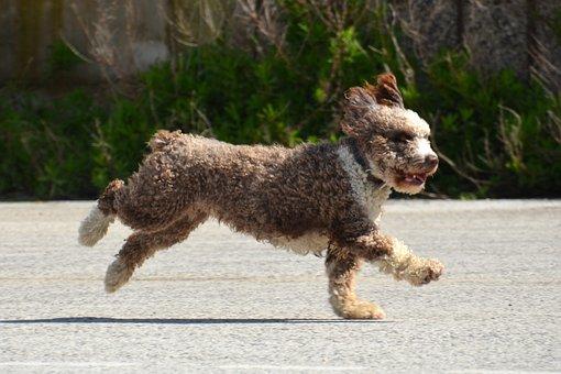 Dog, Evelyn Marie, Wuschelig, Cute, Sweet, Fur