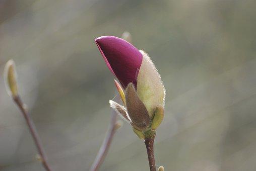 Azalea, Flower, Spring, Garden, Flowers, Bush, Pink